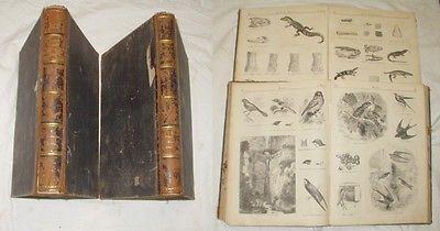Illustrierte Naturgeschichte des Tierreichs (2 Bände)