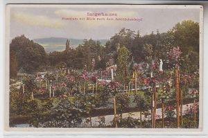 71747 Ak Sangerhausen Rosarium mit Blick nach dem Schlößchenkopf um 1920