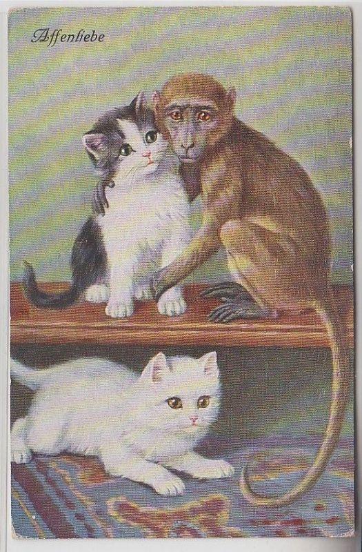 68595 Kitsch Ak Katzen Babys spielen mit Affe