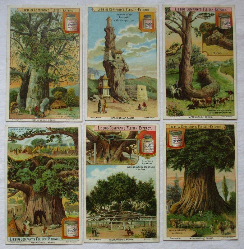Liebigbilder Serie Nr. 539 Merkwürdige Bäume I 1902 (5/125614)