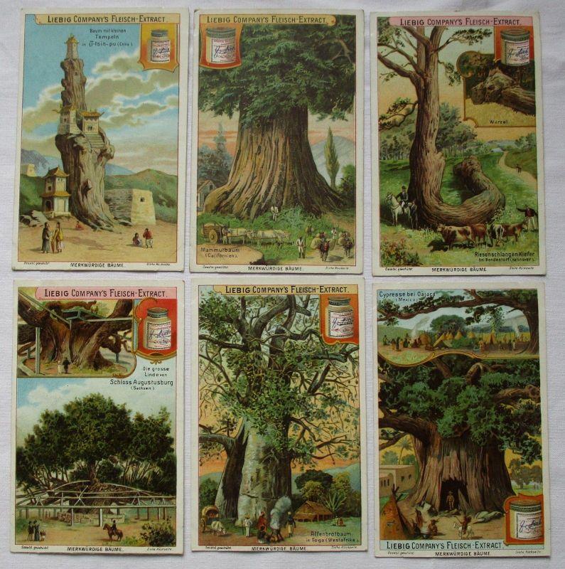 Liebigbilder Serie Nr. 539 Merkwürdige Bäume I 1902 (5/123723)