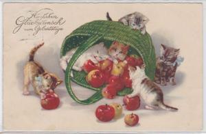 87820 Glückwunsch Ak 6 Kätzchen spielen mit Korb voll Äpfeln 1928
