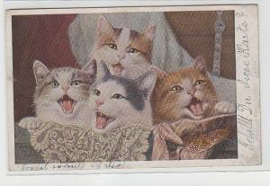 71822 Ak 4 Katzenkinder im Körbchen 1919