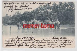 83571 Ak Ceylon Sri Lanka Elephants Elefanten 1904