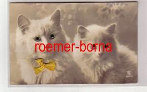 80639 Foto Ak 2 Katzen mit Glasaugen und Schleife um 1925