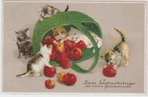 87819 Glückwunsch Ak 6 Kätzchen spielen mit Korb voll Äpfeln 1928