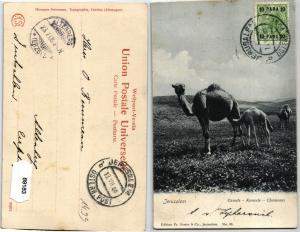89183 AK Jerusalem - Camels - Kameele - Chameaux 1908