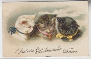46523 Glückwunsch Ak 3 Katzenkinder mit Halsbändern 1931