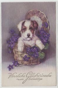 47411 Glückwunsch Ak Hund sitzt in Blumenkorb 1934