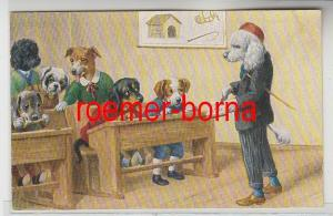 81565 Humor Ak Hunde sitzen auf Schulbank um 1910