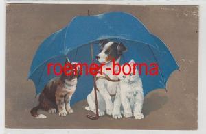 81438 Humor Ak Hund und 2 Katzen sitzen unter Regenschirm 1921