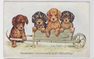 71287 Ak 4 Dackelwelpen mit Schubkarre 1928