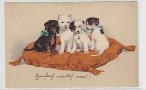 87296 Ak 4 Hundewelpen sitzen auf Kissen 1925