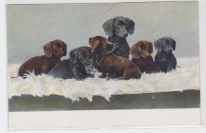 89254 Künstler AK 6 Dackel auf einem weißen Fell, Hundewelpen, Welpen mit Mutter