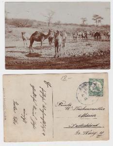 24980 Foto Ak Deutsch Süd West Afrika Namibia Dromedare 1911