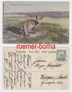 83006 Ak Karibib Deutsch Süd West Afrika Löffelhund 1912
