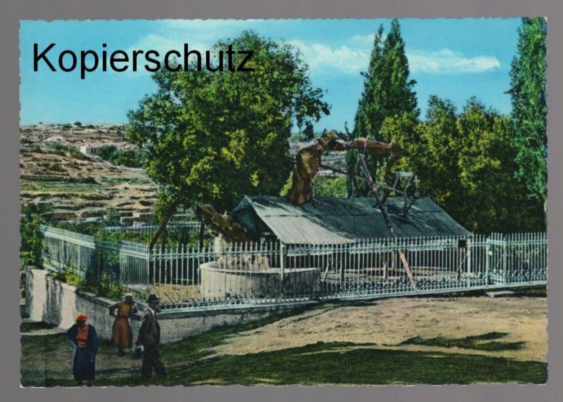 ÄLTERE POSTKARTE OAK TREE OF HEBRON KINGDOM OF JORDAN Eiche Baum arbre Palästina Palestine cpa AK Ansichtskarte postcard
