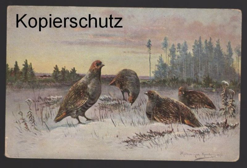 ALTE KÜNSTLER POSTKARTE SERIE HAAR- UND FEDERWILD SIGN. M. MÜLLER JUNIOR 1901 hunting chasse Jagd postcard Ansichtskarte