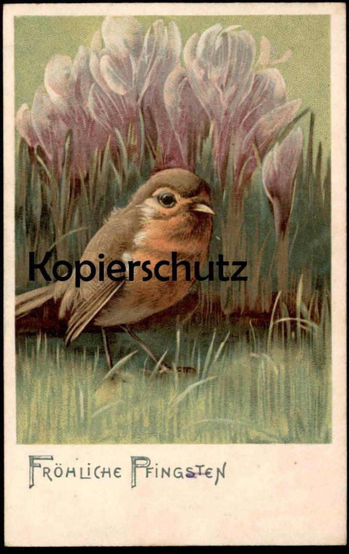 ALTE POSTKARTE FRÖHLICHE PFINGSTEN Rotkehlchen robin le rouge-gorge Ansichtskarten postcard cpa AK