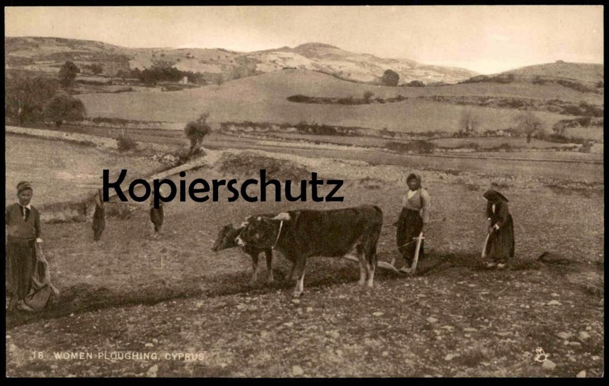 ALTE POSTKARTE WOMEN PLOUGHING CYPRUS RAPHAEL TUCK´S POSTCARD farmer Bauer Kühe Cows Vaches Chypre Zypern cultivateur AK