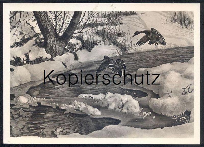 KÜNSTLER POSTKARTE EINFALLENDE ENTEN FRIEDRICH REIMANN Zeulenroda Ente duck canard cane ducks canards cpa postcard Hiver
