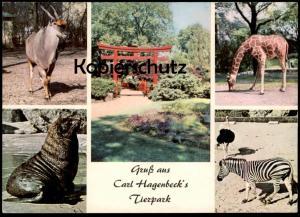 POSTKARTE CARL HAGENBECK´S TIERPARK ZOO ZEBRA STRAUSS GIRAFFE SEELÖWE Garden jardin zoologique postcard Ansichtskarte