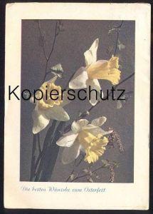 ALTE POSTKARTE BLUMEN NARZISSEN Narcisse Daff Daffodil Daffodils Flowers Fleurs Stempel Berlin 1941 Rohrpost bringt...