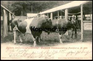 ALTE POSTKARTE DEUTSCHE LANDWIRTSCHAFTSGESELLSCHAFT WANDERAUSSTELLUNG FRANKFURT 1899 Kuh Cow Bull Taureau Vache cpa