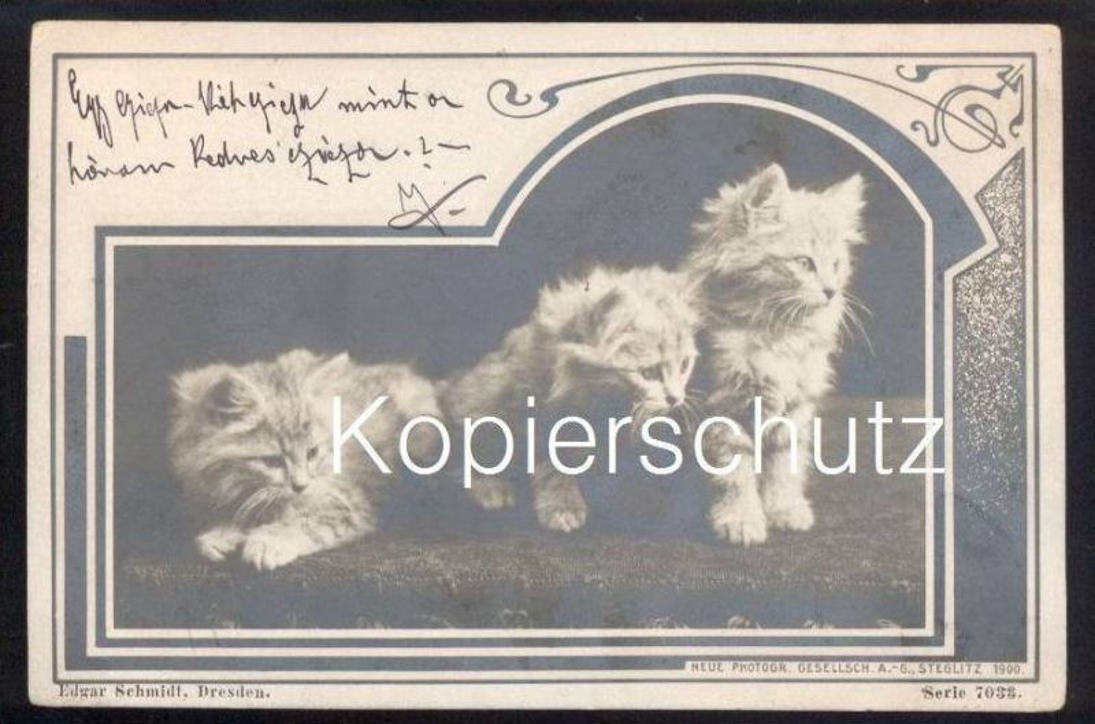 ALTE POSTKARTE KATZE DREI KATZEN 1900 Foto Photo cat chat chats cats Tiere Tier animal AK Ansichtskarte cpa postcard