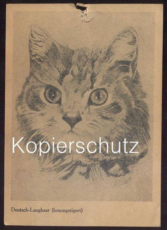 ALTE POSTKARTE KATZE DEUTSCH-LANGHAAR 1947 BRAUNGETIGERT Deutschlanghaar chat cat AK Ansichtskarte postcard cpa