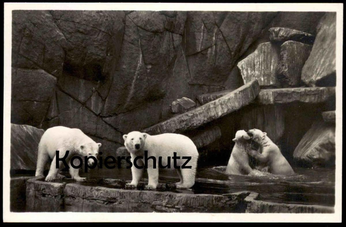 ALTE POSTKARTE NORDLAND-PANORAMA EISBÄREN polar bear ours polaire blanc Bären Hamburg Hagenbeck Tierpark Zoo postcard AK