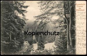 ALTE POSTKARTE CASSEEDORFER TANNEN DIE WOLFSSCHLUCHT Tannen Eutin Kasseedorfer postcard AK Ansichtskarte cpa