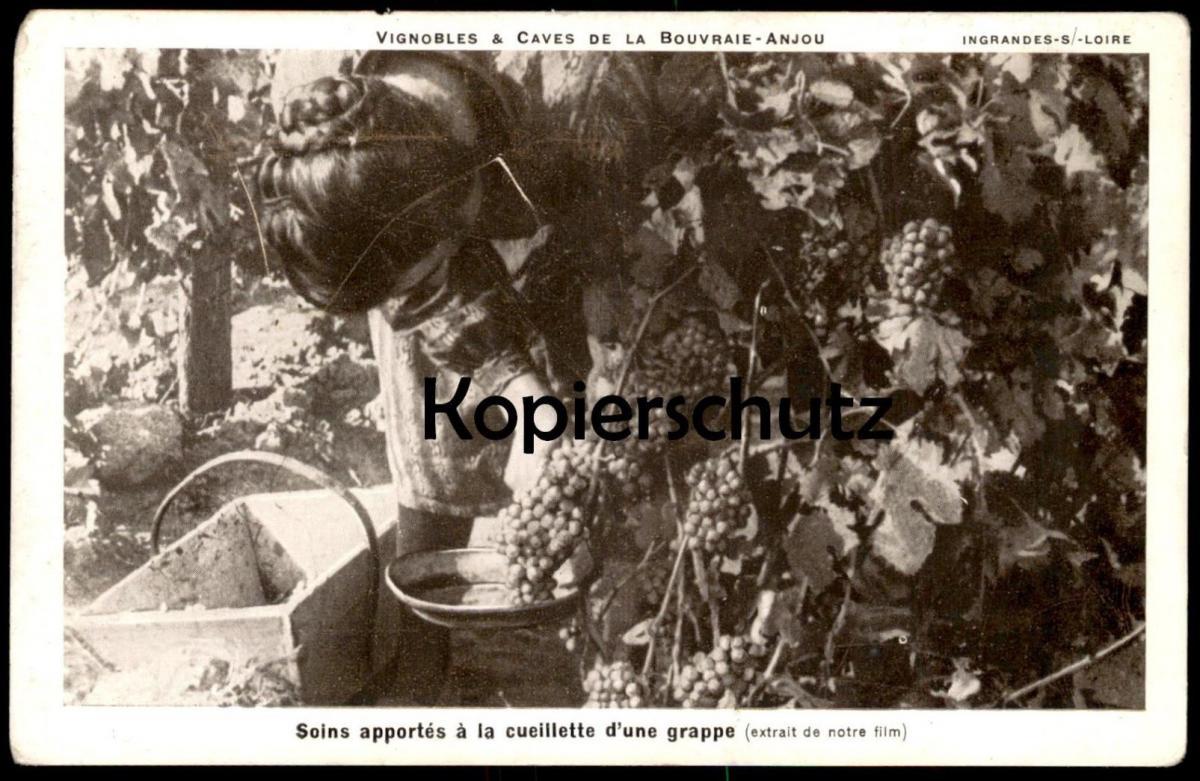 ALTE POSTKARTE VIGNOBLES & CAVES DE LA BOUVRAIE-ANJOU SOINS APPORTÉS Á LA CUEILLETTE D'UNE GRAPPE Son Vignoble