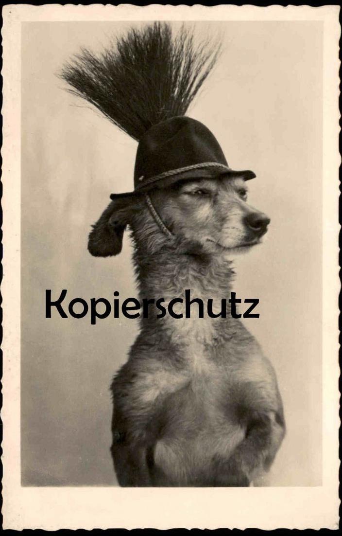 ALTE POSTKARTE VERMENSCHLICHTER HUND JAGDHUT GAMSBART TRACHTENHUT humanized dog chien Ansichtskarte postcard cpa AK