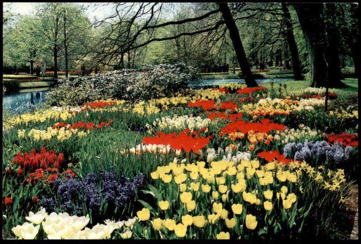 ÄLTERE POSTKARTE BLUMEN HOLLAND IN BLOEMENTOOI BLUMENSCHMUCK Tulip Tulipe Flowers Fleurs Bloemen Nederland Niederlande