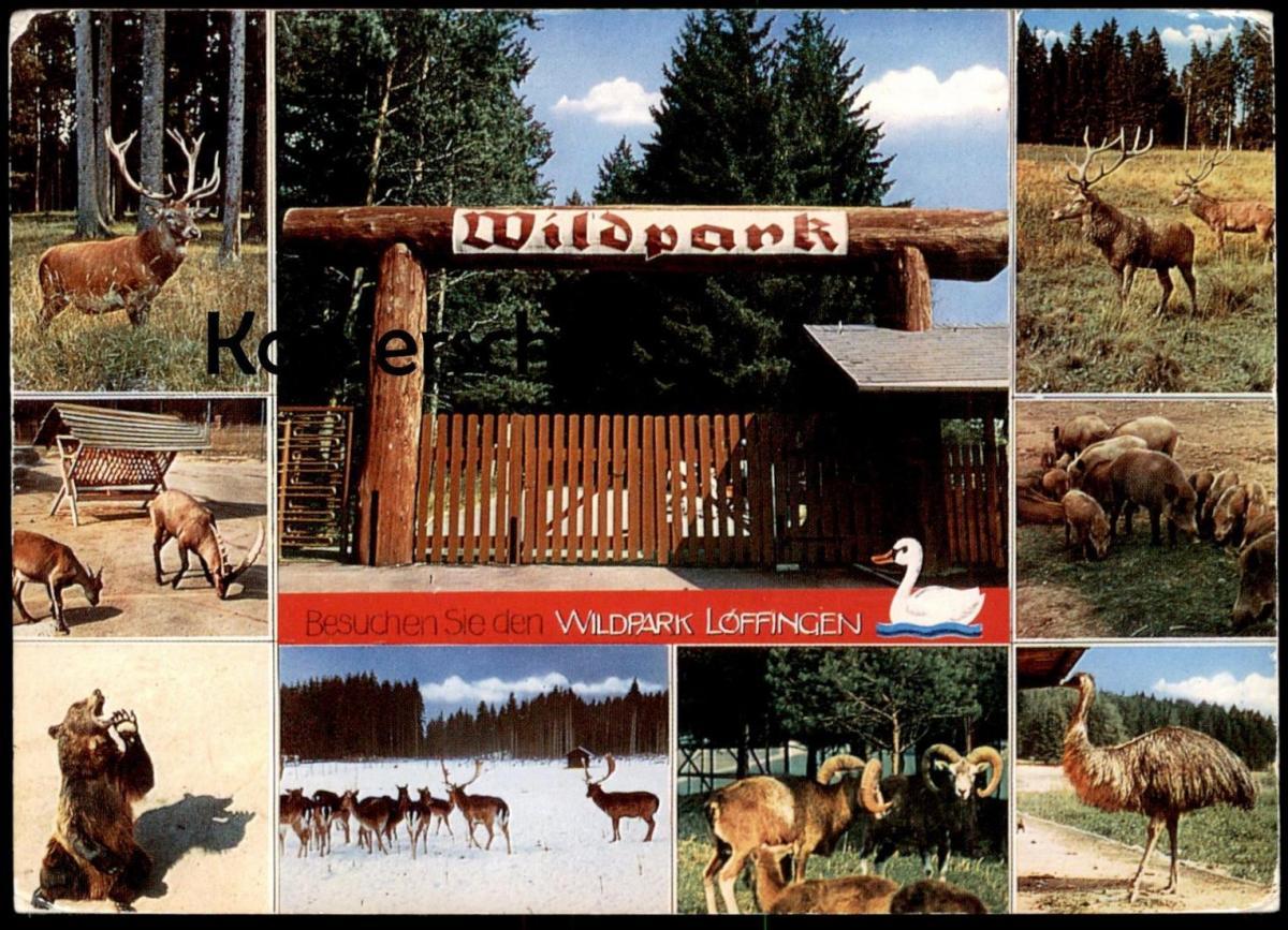 ÄLTERE POSTKARTE WILDPARK LÖFFINGEN SCHWARZWALD HIRSCH Bär ours bear roe deer cerf Tierpark Ansichtskarte postcard AK