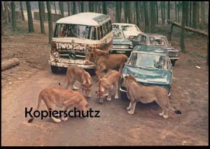 ÄLTERE POSTKARTE LÖWEN AUTO SAFARI TÜDDERN BEI GEILENKIRCHEN MERCEDES AUDI NSU Zoo Tierpark lions Ansichtskarte postcard