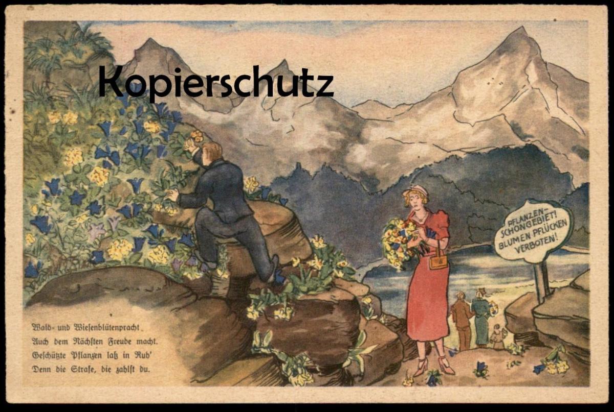 ALTE POSTKARTE REICHSSTELLE FÜR NATURSCHUTZ PFLANZENSCHUTZ Pflanzen Blumen flowers fleurs Verbot Ansichtskarte postcard 0