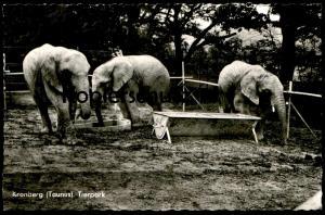 ÄLTERE POSTKARTE KRONBERG IM TAUNUS TIERPARK ELEFANTEN Zoo Elefant elephant elephants tusker cpa postcard AK postcard