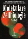 Lodish, Harvey F., David Baltimore Arnold Berk u. a. Molekulare Zellbiologie.
