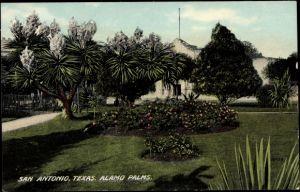 Ak San Antonio Texas USA, general view of the Alamo Palms