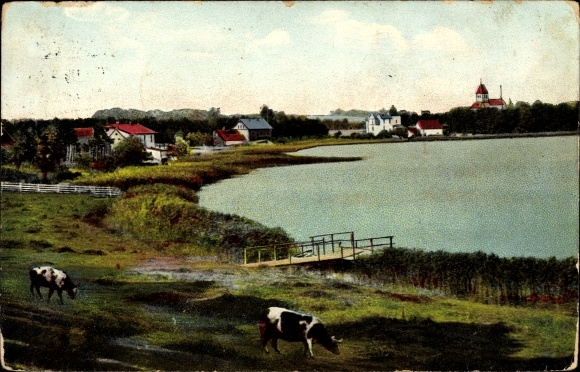 Ak Eibau Kottmar in der Oberlausitz, Blick auf den Ort, See, Kühe