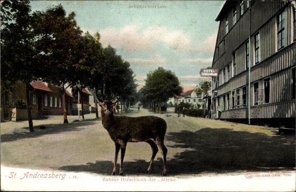 Ak St. Andreasberg Braunlage, Zahme Hirschkuh, Mieke, Schützenstraße, Hotel Schützenhaus