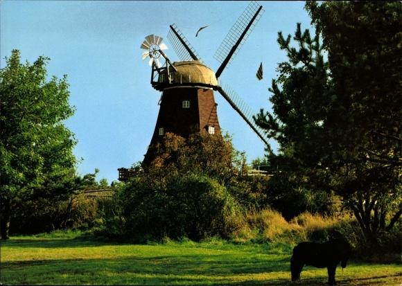 Ak Lauenburg an der Elbe, Windmühle, Mühlenmuseum und Restauration, Inh. Rolf Weber