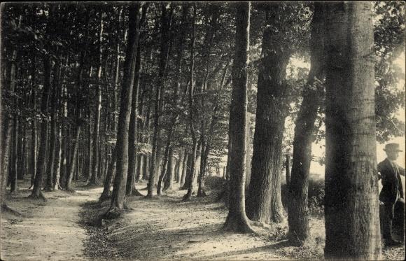 Ak Hamburg Nord Groß Borstel, Waldpartie, Borsteler Jäger, W Hartkopp