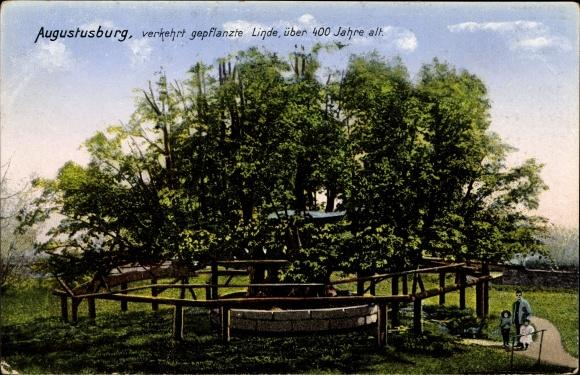 Ak Augustusburg im Erzgebirge, Verkehrt gepflanzte Linde, Zieher