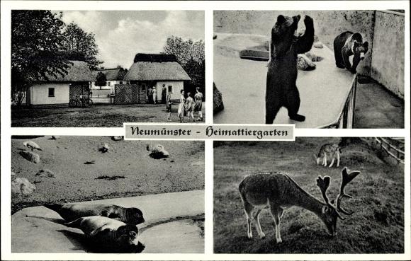 Ak Neumünster in Schleswig Holstein, Heimattiergarten, Bären, Robben, Damhirsch