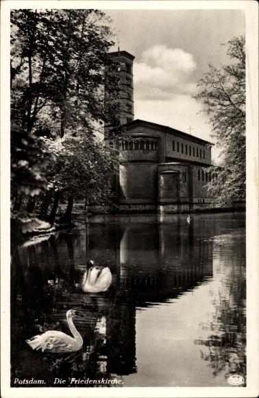 Ak Potsdam in Brandenburg, Partei am Teich mit Blick auf die Friedenskirche, Schwäne