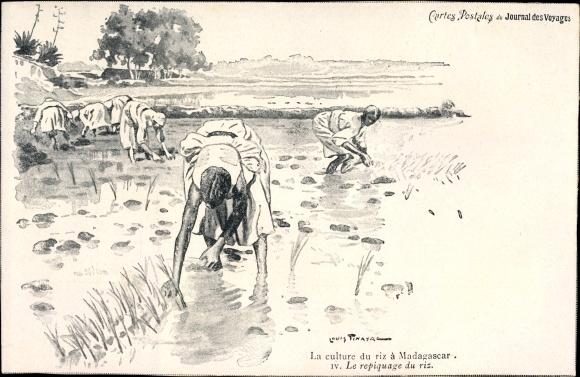 Künstler Ak Madagaskar, La culture du riz, Le repiquage du riz, Reisbauern