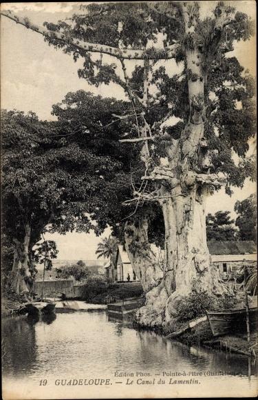 Ak Guadeloupe, Le Canal du Lamentin, Baum, Boot